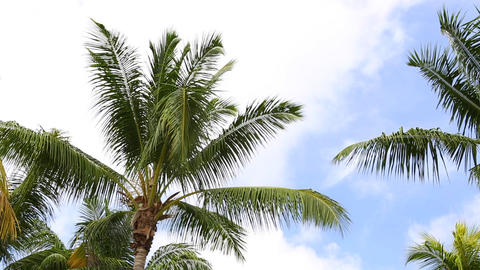 Palm trees with blue sky and clouds ビデオ
