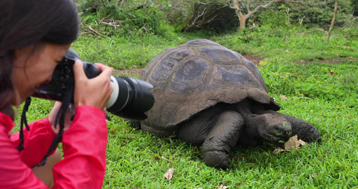 Wildlife videographer and tourist on Galapagos Islands by Giant Tortoise Live Action