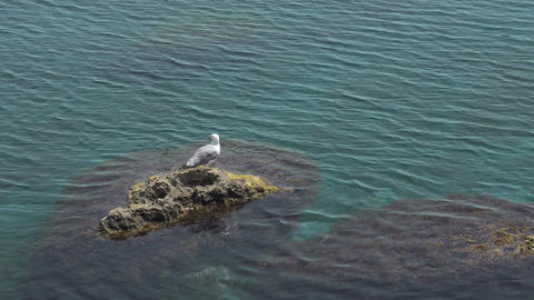 Lonely Seagull Sitting On Rock In Sea Live Action