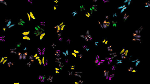 Butterflies Arrived Animation