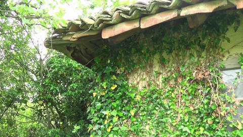 Plants on the wall and on the roof roof of the old house Live Action