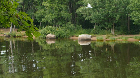 Scenic landscape green forest reflected in the lake Live Action