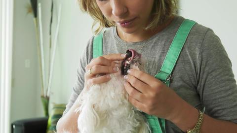 2-Woman Inspecting Teeth Dental Hygiene Of Pet Dog Footage