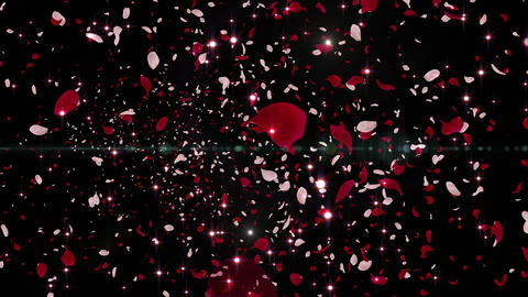 Rose Petals and Lens Flares 16 Red-Pink Fb 30s 4k Animation