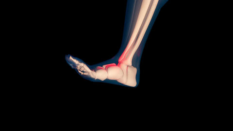 4K Ankle Pain in Human Body Transparent Design with Matte 2 Animation