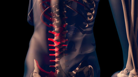 4K Lower Spine Pain in Human Body Transparent Design with Matte 1 Animation