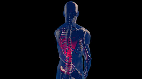 4K Spine Pain in Human Body Transparent Design with Matte 1 Animation
