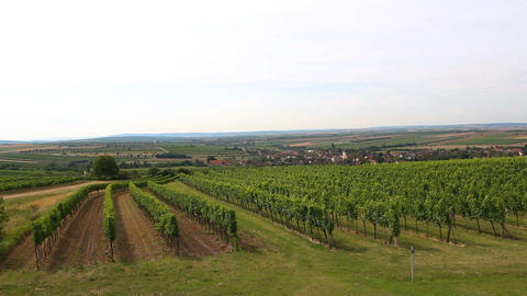Nice vineyard plant with small village, agriculture, south moravia, Czech republic Footage