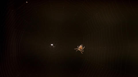 Spider weaves a web Live Action