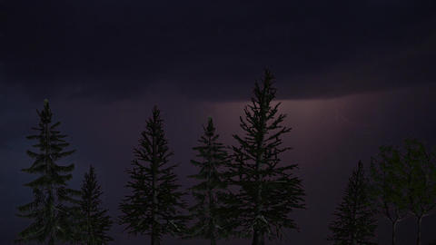 Lightning in the coniferous forest at night Live Action