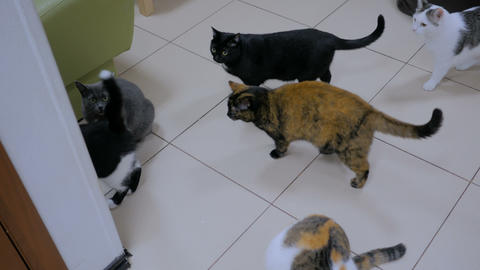 Few cats waiting meal time Footage