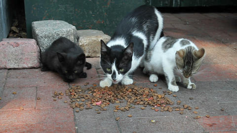 Alley street cats eating cat food Live Action