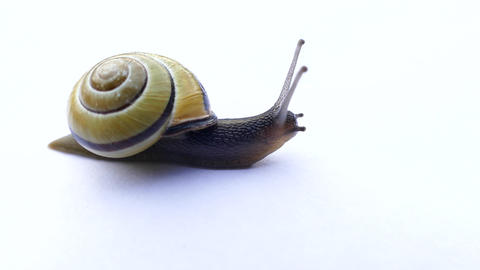Snail Isolation Live Action