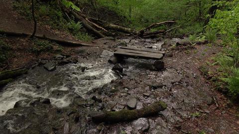 Windbreak trees in water, quick stream run across hiking path Footage