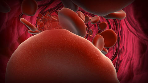Red blood cells flowing through an artery with stent Animation