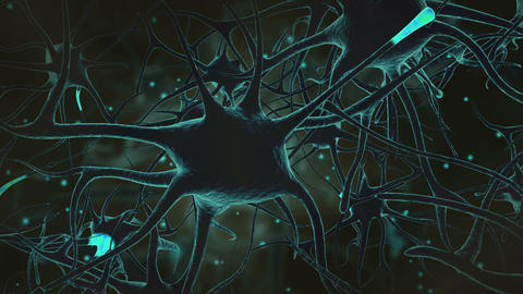 Neuron signals Animation