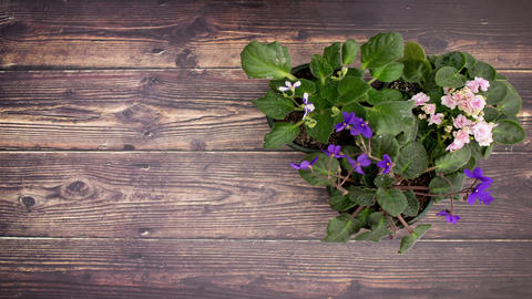 Flowers moving on wooden background - Stop motion Animation