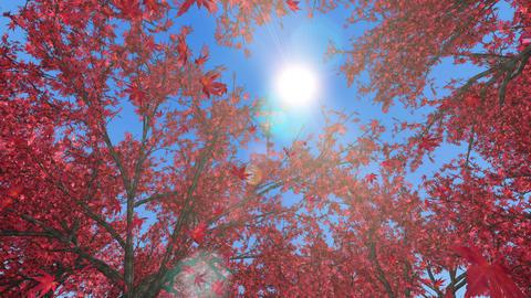 Maple forest, upward, rotation, loop, blue sky CG動画