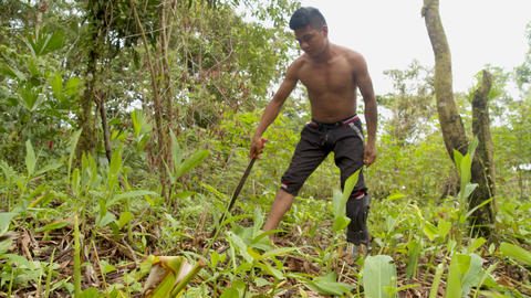 Indigenous Man Cutting The Weeds In The Amazon Jungle Live Action