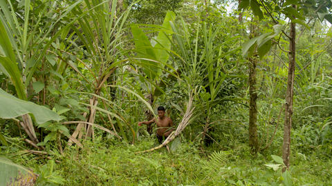 Indigenous Man Cutting Weeds Open A Path Through The Amazon Rainforest Live Action