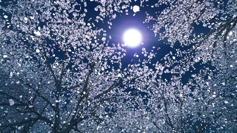 Cherry forest, upward, rotation, loop, night sky image CG動画