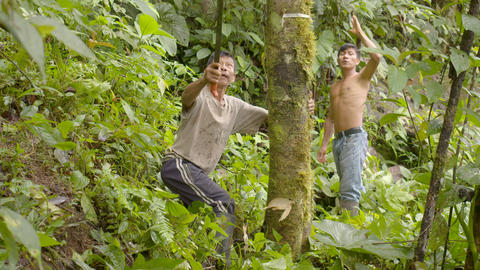 Indigenous Men Cutting Down A Tree In The Amazon Rainforest Footage