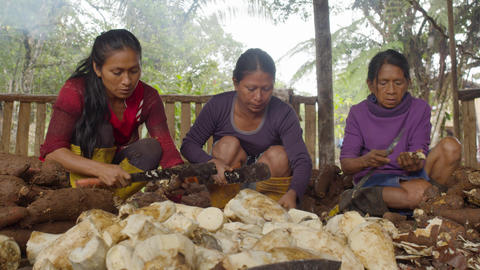 Group Of Three Indigenous Women Peeling Yucca In The Amazon Rainforest In Ecuador Live Action