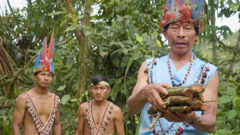 Indigenous Chief Explaining The Medicinal Powers Of Ayahuasca In Ecuador Footage