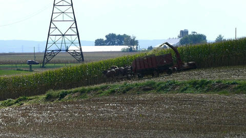 Amish Farming Harvesting is Fall Crops With Horses Pulling his Equipment Footage