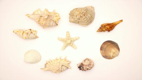 Shells and the Star in the middle - Stop motion animation Animation