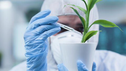 Close up static shot of biochemist at his workplace making test on plants Footage
