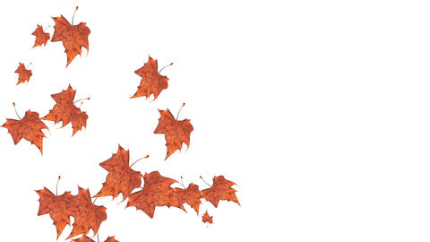 Falling autumn leaves on white background Animation