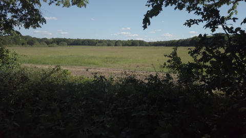 JSP-0798 Windy day pan across fields framed with trees blue sky Live Action