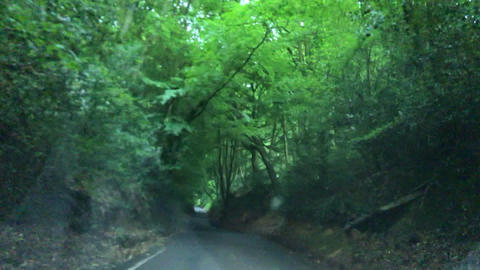 JSP-0844 View of country lanes covered in trees through windscreen of fast car Live Action
