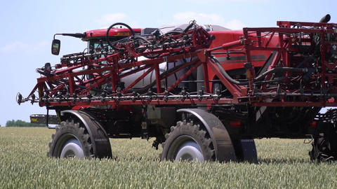 Self propelled sprayer with big clearance is driving on the wheat field Live Action