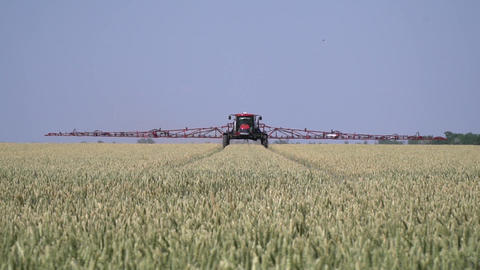 Wheat field and a big self propelled sprayer is driving from the horizon Live Action