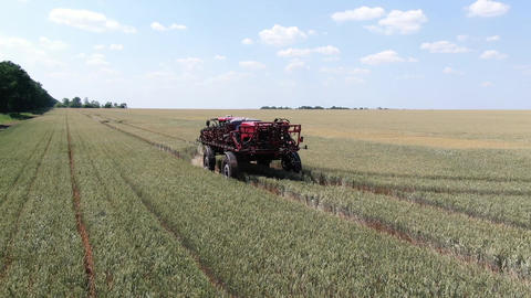 Big modern self propelled sprayer is driving on the tracks of the wheat field Live Action