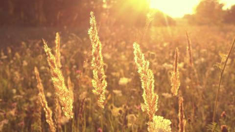 Grass in magical sunlight, flowers field Footage