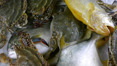 Delicious Croaker Pomfret fish & crabs within dial... Stock Video Footage