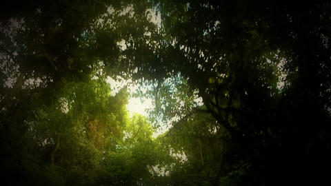 Tree travelling 02 Stock Video Footage