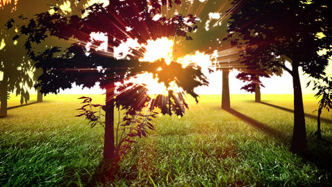 Sunny trees loop Stock Video Footage