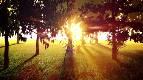 Sunny Trees Loop stock footage