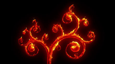 Growing blazing branches Animation