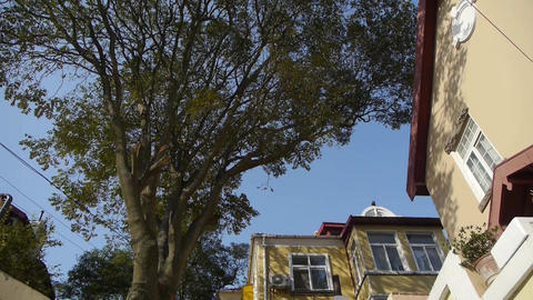Panoramic of Tree with old house,blue sky & lush canopy at Europe German arc Footage