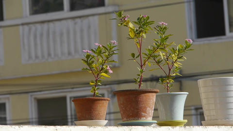 Flower pots on balcony shaking in the wind Stock Video Footage