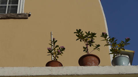 Flower pots on balcony & blue sky.looking up angle Footage