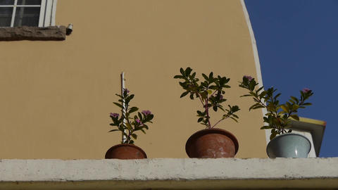 Flower pots on balcony shaking in wind & blue sky.looking up angle Footage