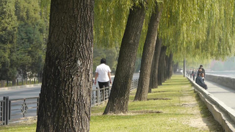 Many willow greenway & tree trunks relying on Beijing... Stock Video Footage
