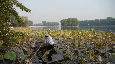 Vast lotus pool,Fisherman on wooden boat clean lake in... Stock Video Footage