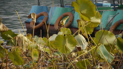 lotus leaf pool in autumn beijing Footage